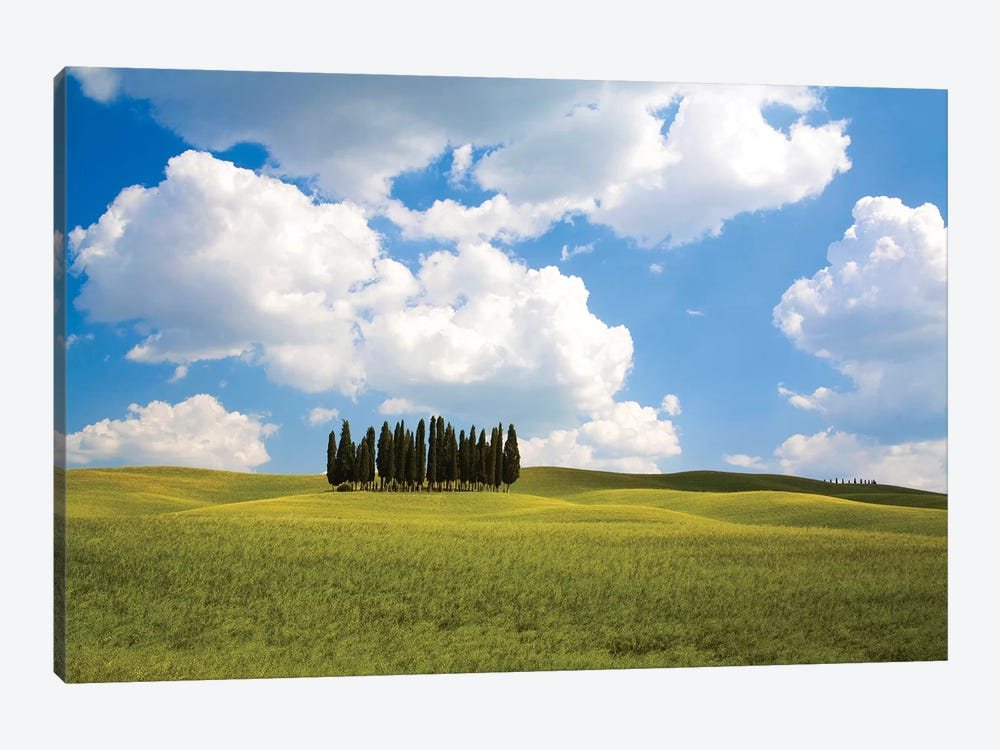 Countryside Cypress Trees, Tuscany Region, Italy by Terry Eggers 1-piece Art Print