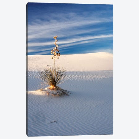 USA, New Mexico, White Sands National Monument, Sand Dune Patterns and Yucca Plants Canvas Print #TEG23} by Terry Eggers Canvas Art