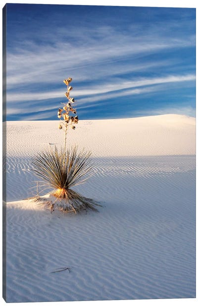 USA, New Mexico, White Sands National Monument, Sand Dune Patterns and Yucca Plants Canvas Art Print