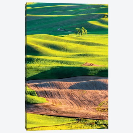 USA, Washington State, Palouse Country, Lone Tree in Wheat Field I Canvas Print #TEG26} by Terry Eggers Art Print