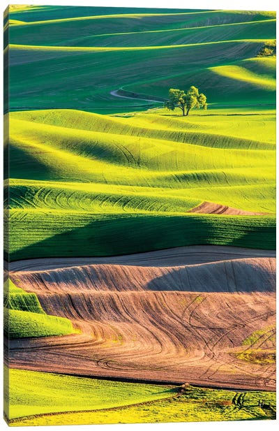 USA, Washington State, Palouse Country, Lone Tree in Wheat Field I Canvas Art Print