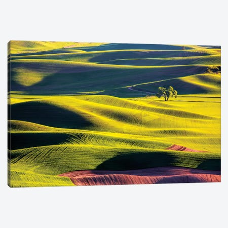 USA, Washington State, Palouse Country, Lone Tree in Wheat Field II Canvas Print #TEG27} by Terry Eggers Canvas Print