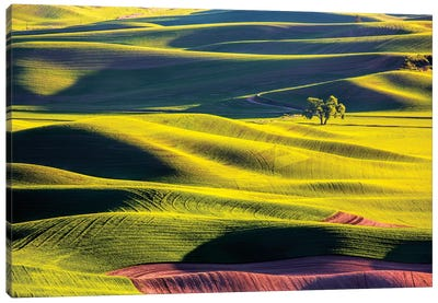 USA, Washington State, Palouse Country, Lone Tree in Wheat Field II Canvas Art Print