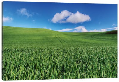 USA, Washington State, Palouse Country, Spring Wheat Field and Clouds I Canvas Art Print