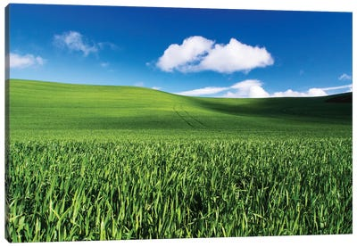USA, Washington State, Palouse, Spring Wheat Field and Clouds Canvas Art Print