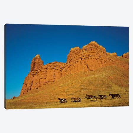 USA, Wyoming, Shell, Heard of Horses Running along the Red Rock hills Canvas Print #TEG37} by Terry Eggers Canvas Wall Art