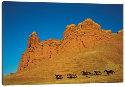 USA, Wyoming, Shell, Heard of Horses Running along the Red Rock hills Canvas Art Print