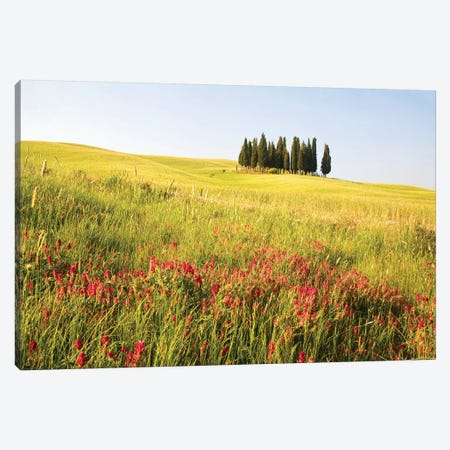 Countryside Wildflowers, Tuscany Region, Italy Canvas Print #TEG4} by Terry Eggers Canvas Art
