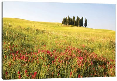 Countryside Wildflowers, Tuscany Region, Italy Canvas Art Print