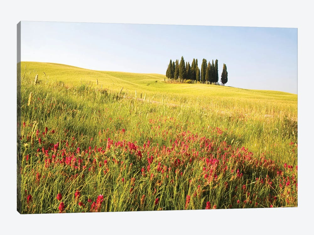 Countryside Wildflowers, Tuscany Region, Italy by Terry Eggers 1-piece Canvas Artwork