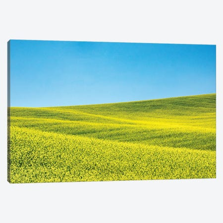 Canola field in Spring Canvas Print #TEG55} by Terry Eggers Canvas Artwork