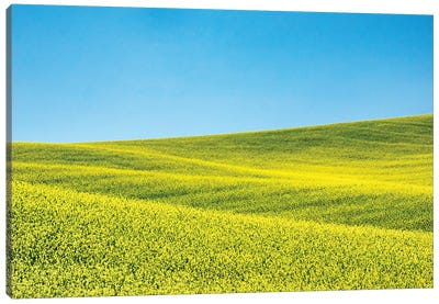 Canola field in Spring Canvas Art Print
