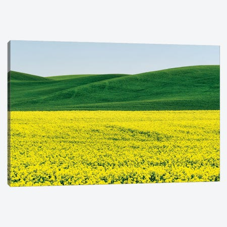 Canola field in Spring Canvas Print #TEG56} by Terry Eggers Canvas Art