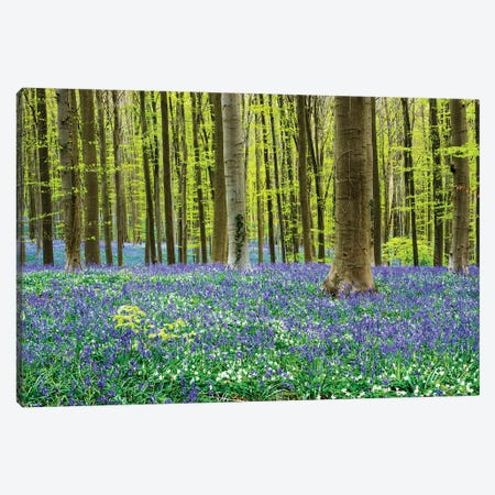 Spring in the Blue Forest 3-Piece Canvas #TEG66} by Terry Eggers Canvas Print