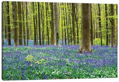 Spring in the Blue Forest Canvas Art Print