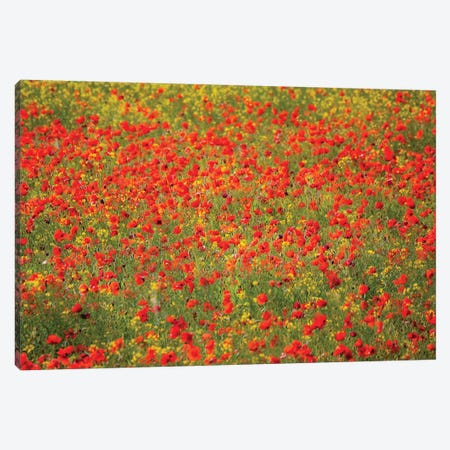 Poppy Field In Full Bloom, Tuscany Region, Italy 3-Piece Canvas #TEG6} by Terry Eggers Canvas Artwork