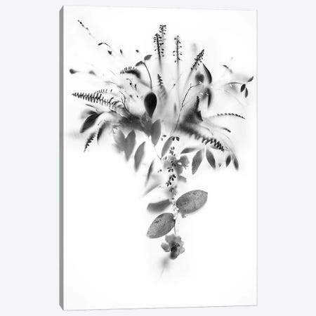 Natural Veil IV Canvas Print #TEI99} by Teis Albers Canvas Print