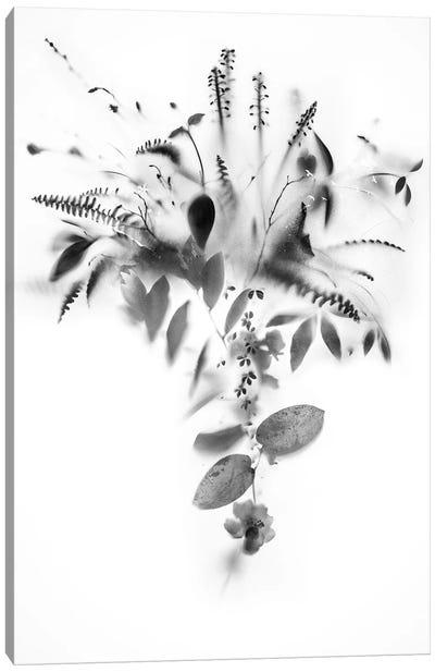 Natural Veil IV Canvas Art Print