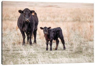 Angus Cow And Calf In Grass Canvas Art Print