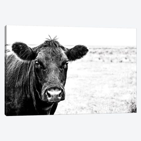 Angus Face Bw Canvas Print #TEJ15} by Teri James Art Print