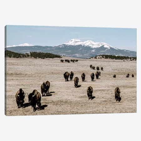 Bison Herd And Mountain Canvas Print #TEJ19} by Teri James Canvas Wall Art