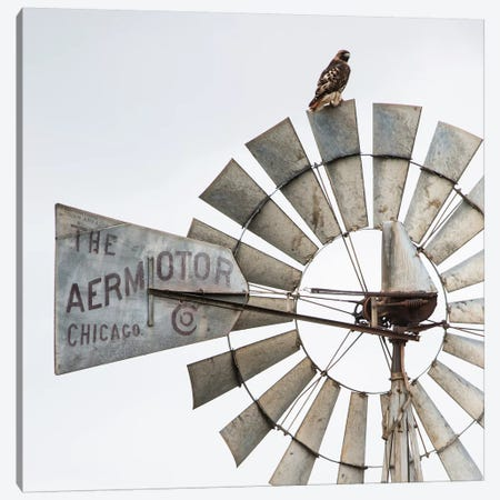 Aermotor Windmill And Hawk Canvas Print #TEJ1} by Teri James Canvas Art