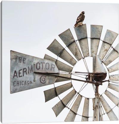 Aermotor Windmill And Hawk Canvas Art Print