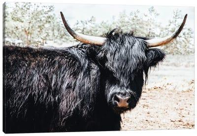 Black Highland Cow Canvas Art Print
