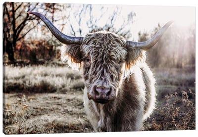 Blonde Highland Cow With Sunburst Canvas Art Print