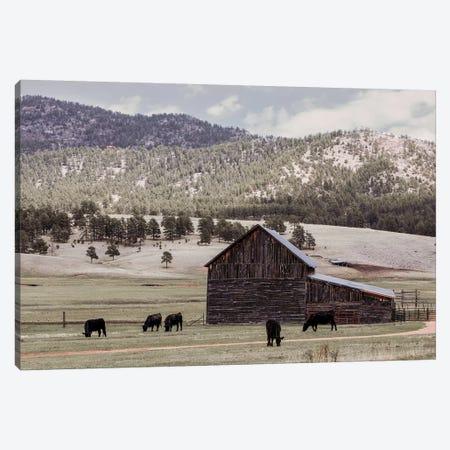 Angus And Old Barn Canvas Print #TEJ2} by Teri James Canvas Artwork