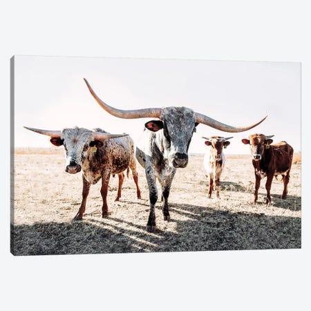 Four Longhorns Canvas Print #TEJ35} by Teri James Art Print