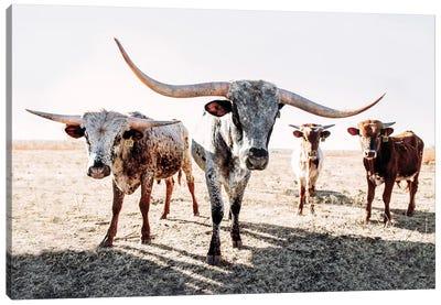 Four Longhorns Canvas Art Print