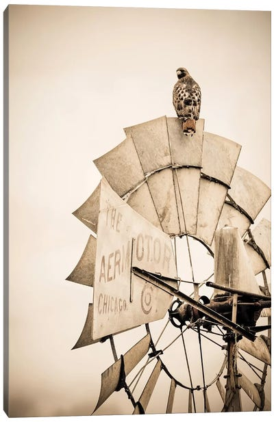 Hawk And Windmill Tan Canvas Art Print