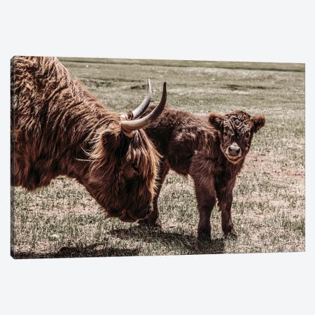 Highland Cow And Calf Canvas Print #TEJ38} by Teri James Canvas Art