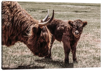 Highland Cow And Calf Canvas Art Print
