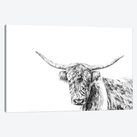 Highland Cow On White Canvas Print #TEJ39} by Teri James Canvas Artwork