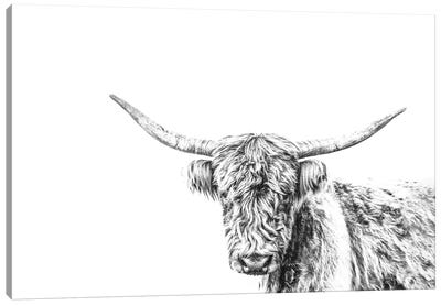 Highland Cow On White Canvas Art Print