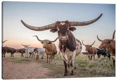 Longhorn Bull Canvas Art Print