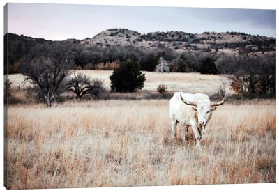 Longhorn Bull White Canvas Art Print
