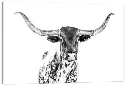 Longhorn Bw Canvas Art Print