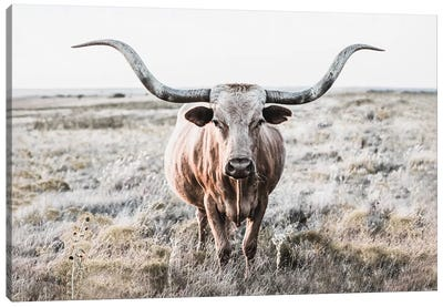 Longhorn Cow Closeup Canvas Art Print
