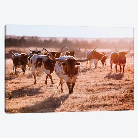 Longhorn Cow Herd Canvas Print #TEJ47} by Teri James Canvas Artwork