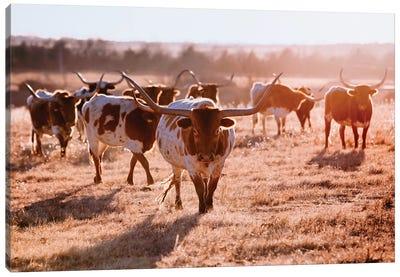Longhorn Cow Herd Canvas Art Print