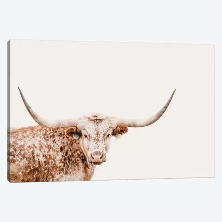 Longhorn On Tan Canvas Print #TEJ51} by Teri James Canvas Artwork