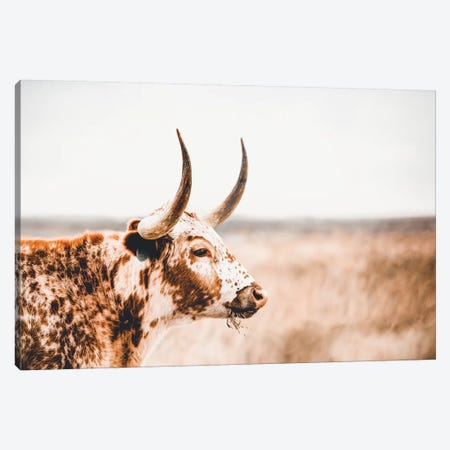 Longhorn Side View Canvas Print #TEJ53} by Teri James Canvas Artwork