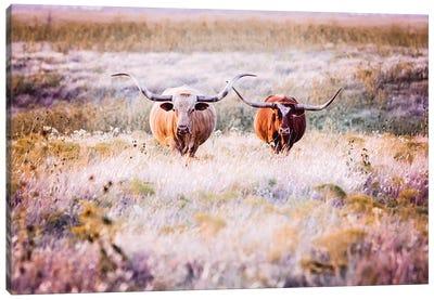 Longhorns In Flowers Canvas Art Print