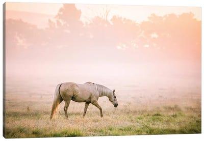 Palomino Horse At Sunrise Canvas Art Print