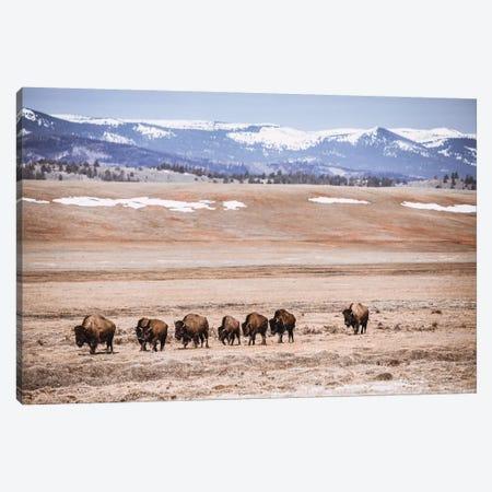 Rocky Mountain Buffalo Canvas Print #TEJ69} by Teri James Canvas Print