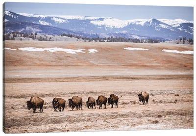 Rocky Mountain Buffalo Canvas Art Print