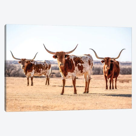 Three Longhorns Canvas Print #TEJ73} by Teri James Canvas Artwork